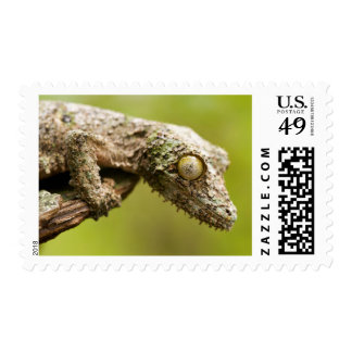 Mossy leaf-tailed gecko on a piece of bark postage stamp