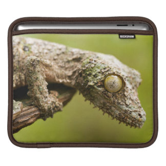 Mossy leaf-tailed gecko on a piece of bark sleeve for iPads