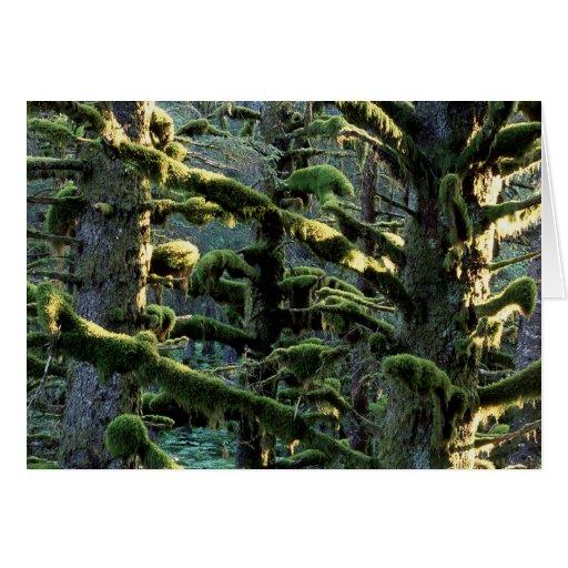 Mossy Morning on Kodiak Island Greeting Card