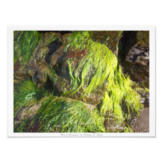 """Mossy Mountains"" Photo Print"
