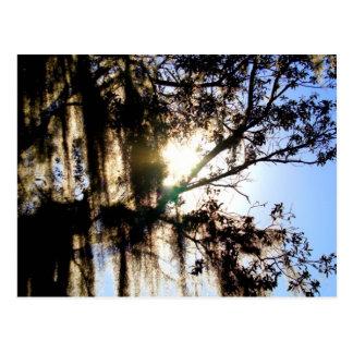 Mossy Oak Postcard