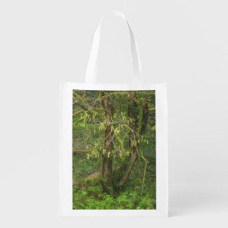 Mossy Oregon Big Leaf Maple in Flower Grocery Bags