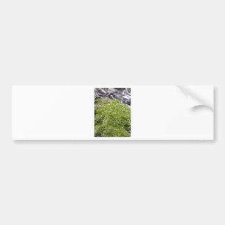 Mossy Rock Bumper Sticker