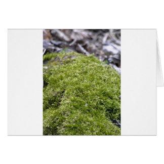 Mossy Rock Card