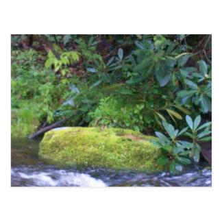 mossy rock on mountain stream postcard