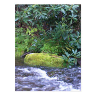 mossy rock on mountain stream post card