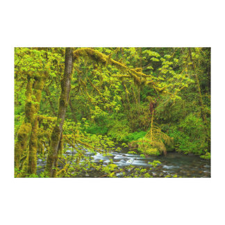 Mossy Rocks And Trees Line Eagle Creek Canvas Print