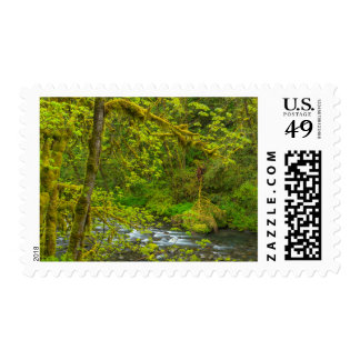 Mossy Rocks And Trees Line Eagle Creek Postage