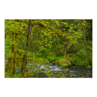 Mossy Rocks And Trees Line Eagle Creek Poster