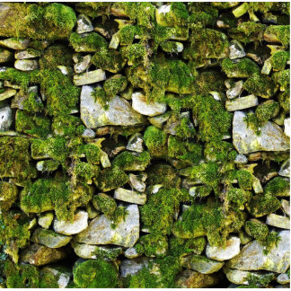 Mossy Rocks Background Acrylic Cut Outs