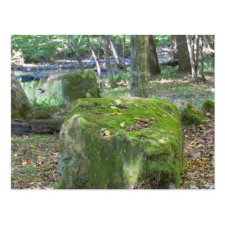 Mossy Rocks on Bank Post Cards