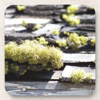 Mossy Roof Coaster