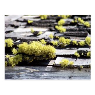 Mossy Roof Postcard