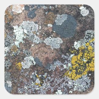mossy square sticker