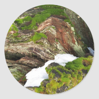 Mossy Stump Classic Round Sticker