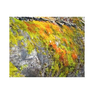 Mossy Tree Canvas