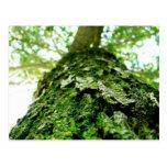Mossy Tree Landscape Postcard