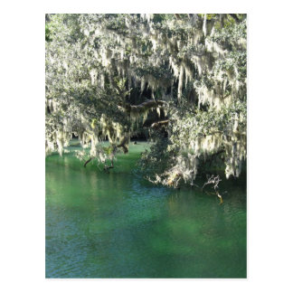 Mossy Tree Over Blue Water Post Card