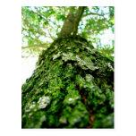 Mossy Tree Portrait Postcard