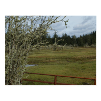 Mossy Tree Postcard