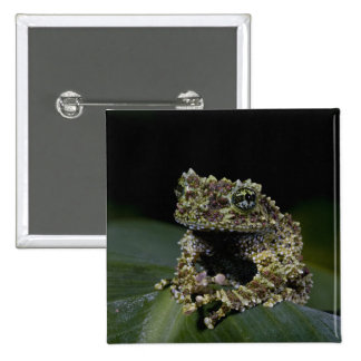 Mossy Treefrog, Theloderma corticale, Native 2 2 Inch Square Button