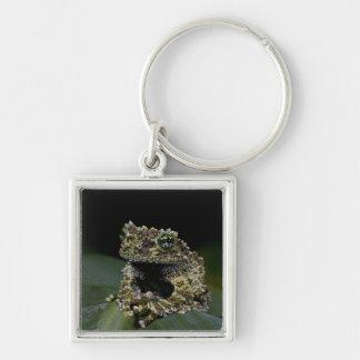 Mossy Treefrog, Theloderma corticale, Native 2 Keychain