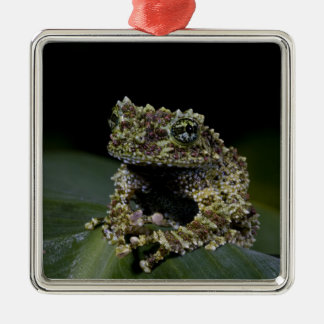 Mossy Treefrog, Theloderma corticale, Native 2 Metal Ornament
