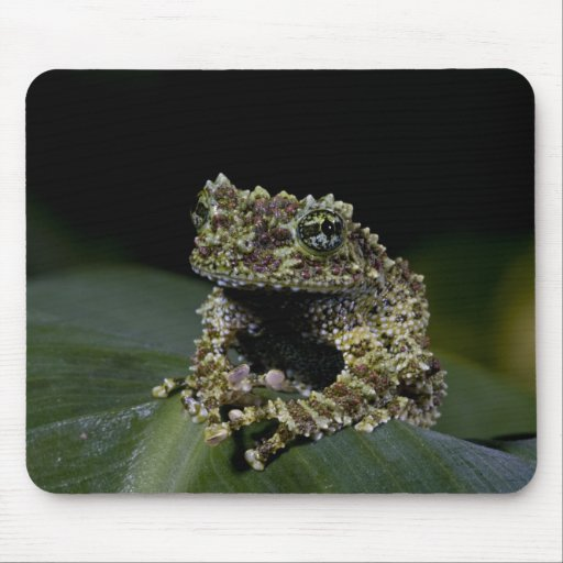 Mossy Treefrog, Theloderma corticale, Native 2 Mouse Pads