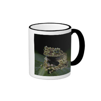 Mossy Treefrog, Theloderma corticale, Native 2 Coffee Mugs