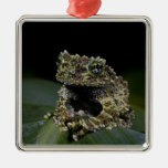 Mossy Treefrog, Theloderma corticale, Native 2 Christmas Tree Ornaments