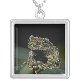 Mossy Treefrog, Theloderma corticale, Native 2 Square Pendant Necklace
