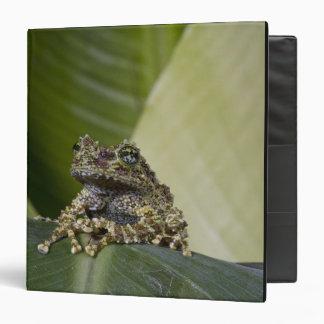 Mossy Treefrog, Theloderma corticale, Native 3 Ring Binder