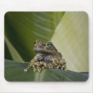 Mossy Treefrog, Theloderma corticale, Native Mouse Pad
