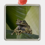 Mossy Treefrog, Theloderma corticale, Native Ornament