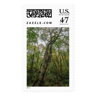 Mossy Trees in Pacific Northwest Postage