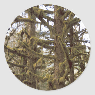 Mossy Trees Lake Quinalt Olympic National Park WA Classic Round Sticker