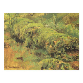 Mossy Wood by Ivan Shishkin Postcard