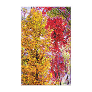 Most Colorful Season of Life Canvas Print