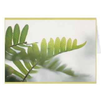 Most delicate ferns with a light yellow border greeting card