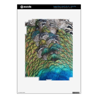 Most Lovely Peacock Feathers Dashing Colors iPad 3 Decals