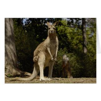 Most often seen in Australia, Eastern Grey Card