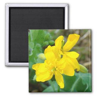 Mostaza salvaje de los Wildflowers amarillos F0044 Imán Cuadrado