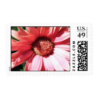 mostly sunny postage stamps