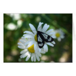 Moth and Daisies Greeting Cards