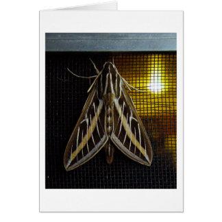 Moth and Lightbulb Card