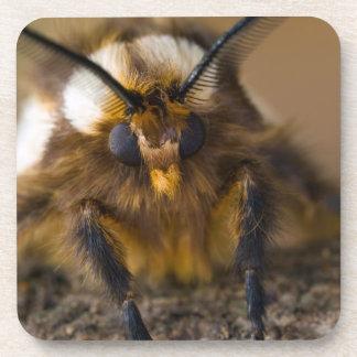 Moth Beverage Coaster