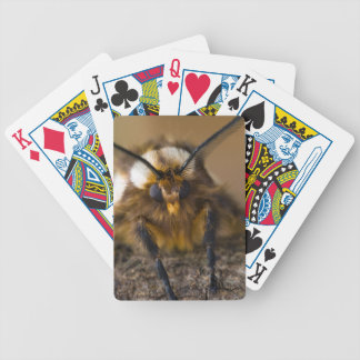 Moth Bicycle Playing Cards