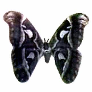 Moth Black Key Chain Sculpture The MUSEUM Zazzle Photo Cut Outs