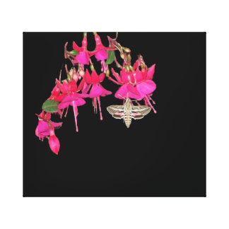 Moth Butterfly Sphynx Fuschia Flowers Floral Canvas Print