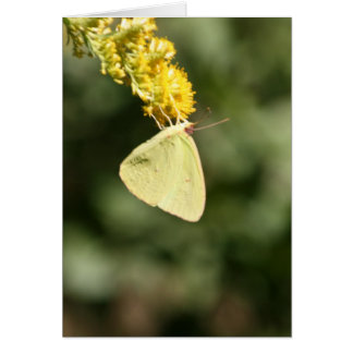 Moth Gathering Pollen Card